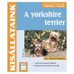 A yorkshire terrier